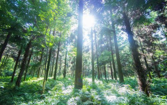 智阁环保生态板:你的健康,我们守护