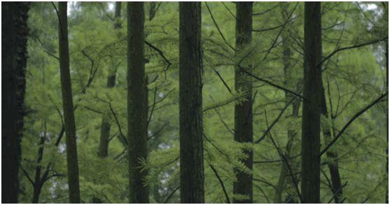 华洲木业,正在崛起的环保王国